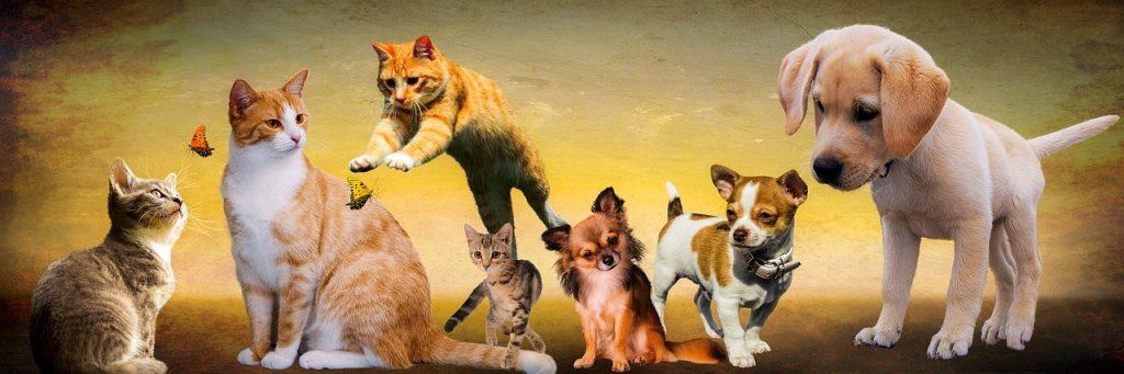 肩こり解消ストレッチ「CAT&DOGストレッチ」!【那覇市、宜野湾市】肩の痛み専門出張整体しんしん